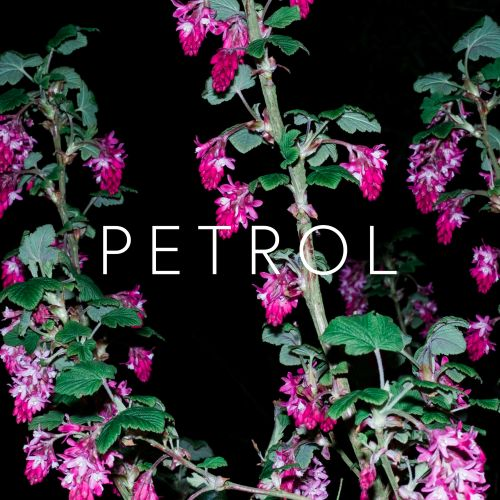 Crystalline Stricture – Petrol